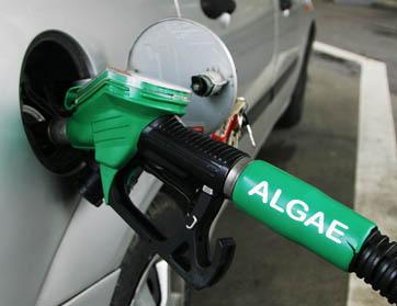 benzina alghe