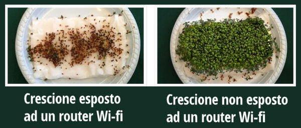 crescione_esposto